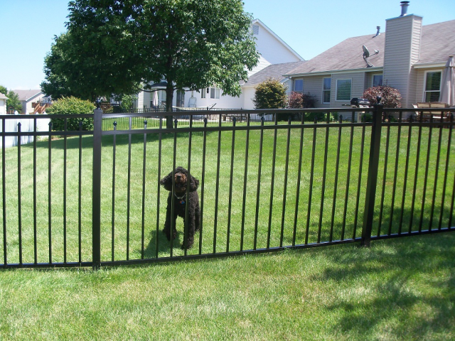 Dog-Pet-Protection-containment-fence-aluminum-metal-installation in harrisburg-mechanicsburg-carlisle-dillsburg-Camp Hill-York-Enola-PA
