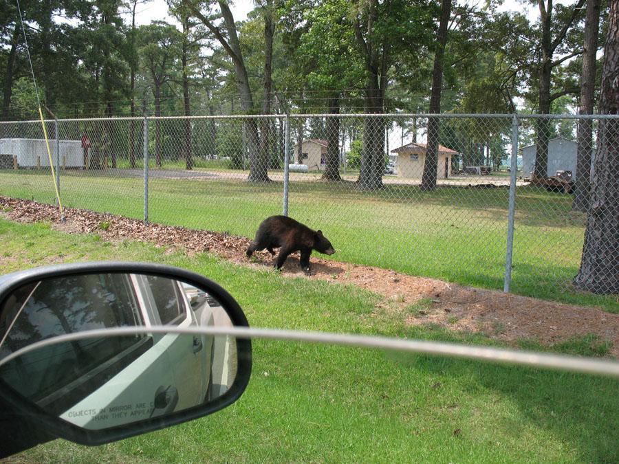 Best Dog Friendly Yard Fences