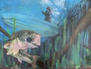 W.H. Largemouth Bass
