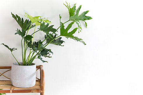 FrecklePot.com Friendly Planter Collecti