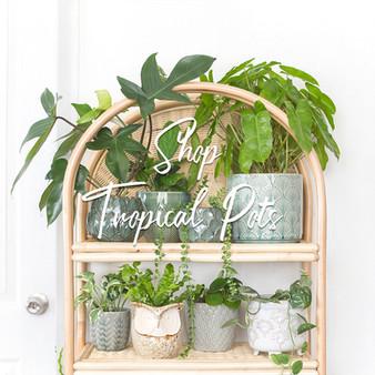 FrecklePot.com Collection - Tropical.jpg