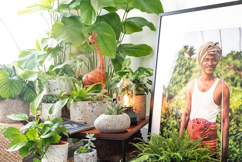FrecklePot.com Freckled Planter Collecti
