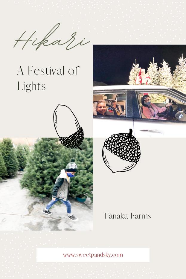 Christmas Time at Tanaka Farms | Hikari A Festival of Lights