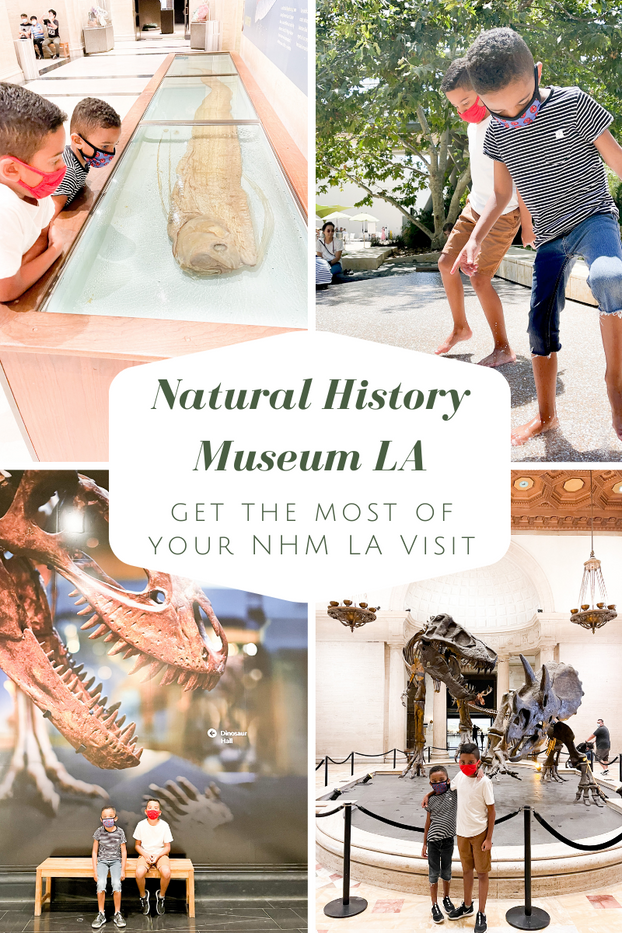 Get the Most From Your Natural History Museum Los Angeles Visit
