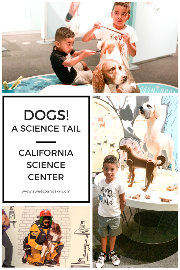 Dogs! A Science Tail | California Science Center