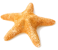 stella_marina.png