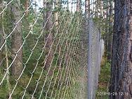 Забор рабица в лесу