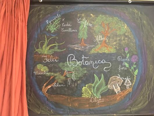 Botanica 5 classe