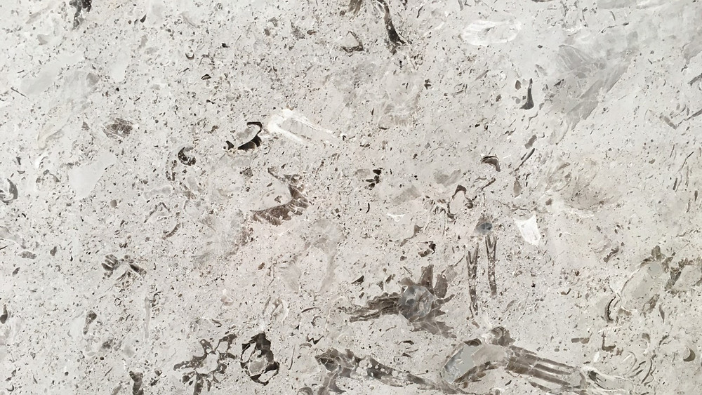 Aurisina Fiorita, Italian grey marble by Pizzul Marmi Aurisina
