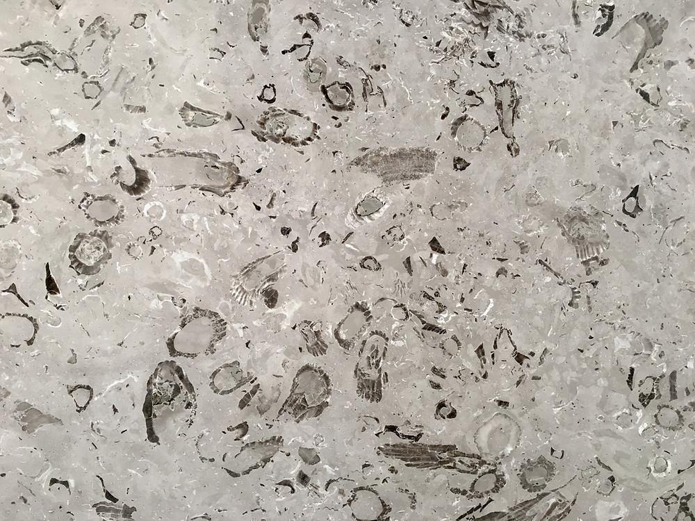 Aurisina Lumachella - Marble - Marmo - Pizzul