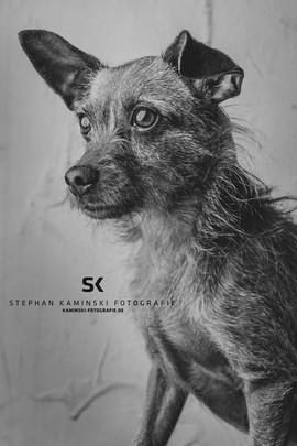 Hundeportraitfotografie