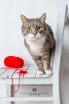 Katzen mit Chrakter