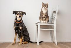 Wie Hund und Katze.