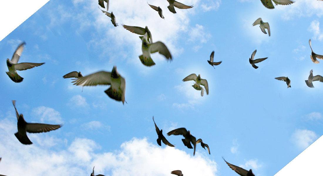 הרחקת יונים פתרון מטרדי יונים וציפורים שרות ואחריות ללא תחרות
