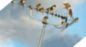 סילוק יונים לצמיתות מטרדי יונים וציפורים הרחקת יונים