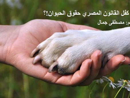 هل كفل القانون المصري حقوق الحيوان!؟