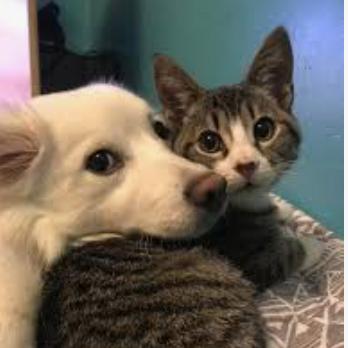 Pets As Healers