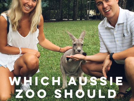 Which Aussie Zoo Should You Visit? Taronga Zoo Vs. Australia Zoo