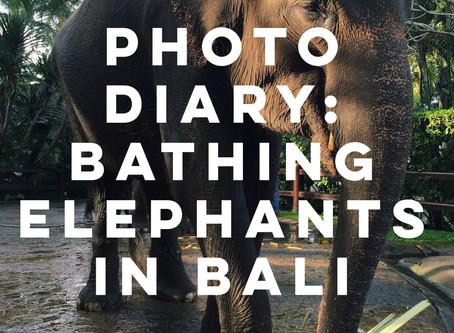 Photo Diary: Bathing Elephants in Bali