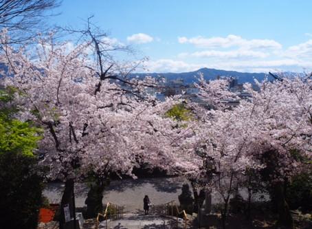 建勲神社の桜がひっそりと満開です2010/4/5