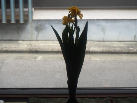 祇園祭の祭花「檜扇(ひおうぎ)」