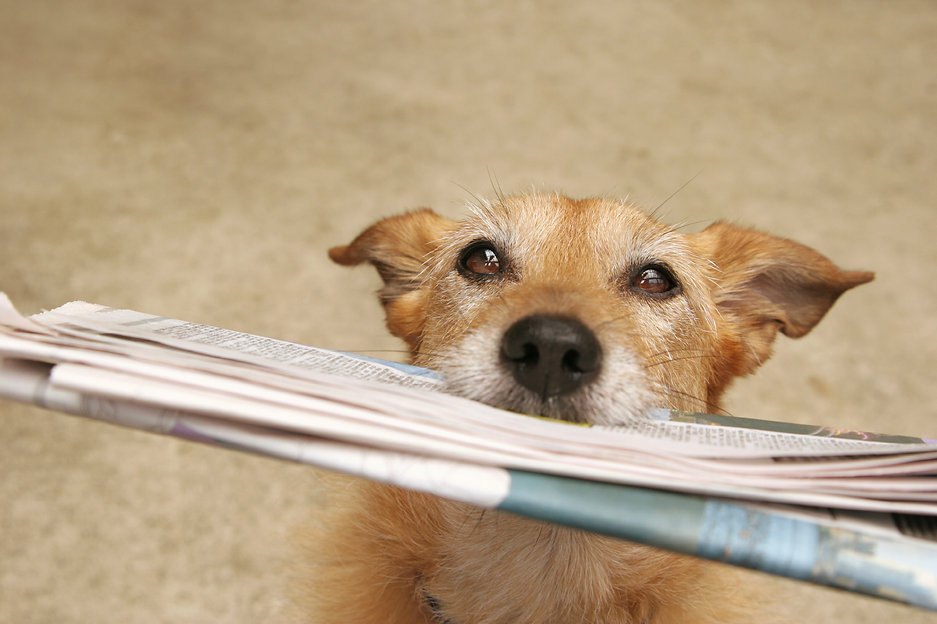Dog-with-newspaper.jpg