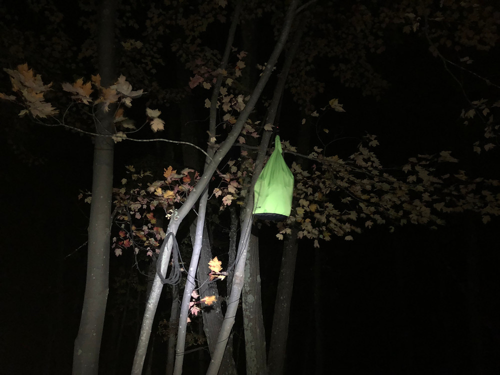 Food bag hanging from a tree in the dark