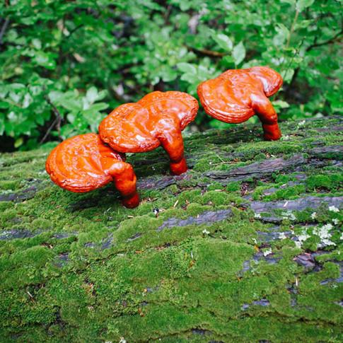 GIANT shiny mushrooms!
