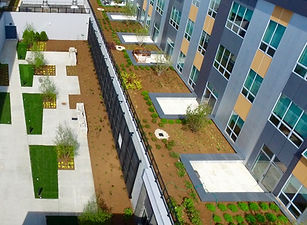 2501 West Armitage Green Roof