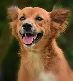 dog-3479122_1280.jpg