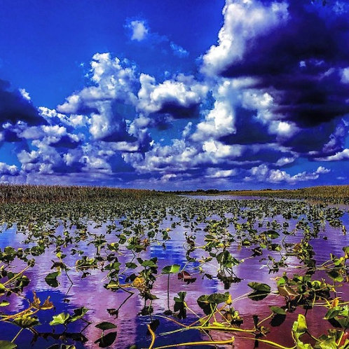 Lilies and Clouds