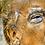 Thumbnail: Donald Wolfpack