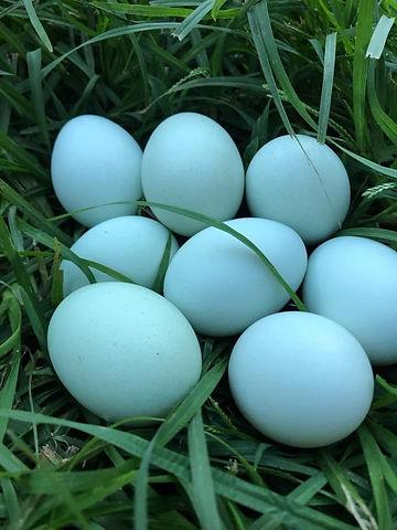 chicken eggs.jpeg