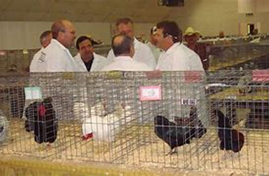 Poultry show.jpg