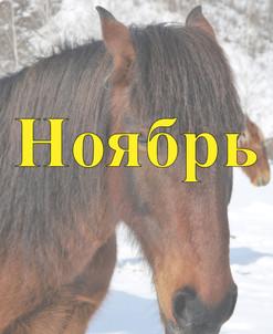Конный прокат Алтай Ноябрь 2021
