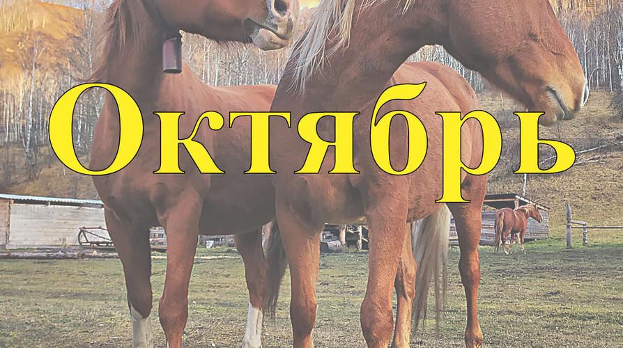 Конный прокат Алтай Октябрь 2021