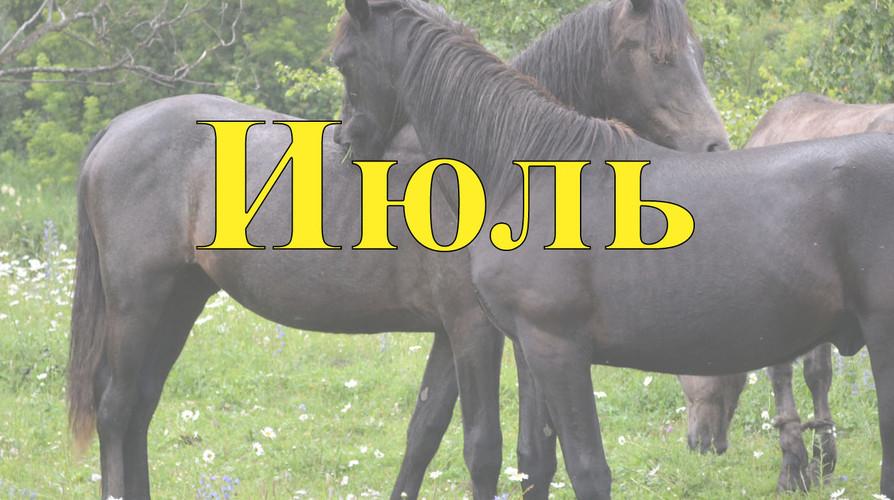 Конные туры по Алтаю Июль 2021