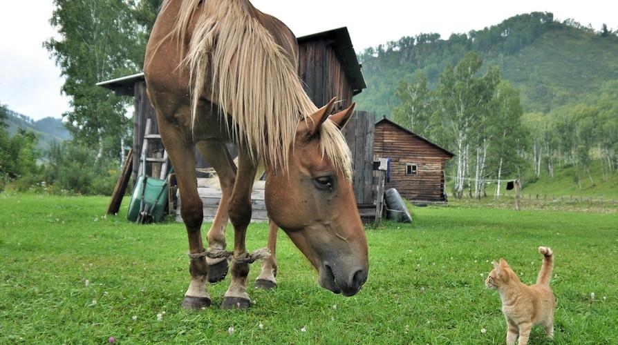Конные туры по Алтаю Май 2021