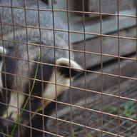 Зоопарк Озеро Киреево