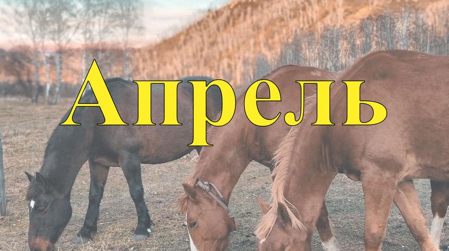 Конные туры по Алтаю Апрель 2021