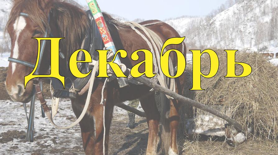 Конный прокат Алтай Декабрь 2021