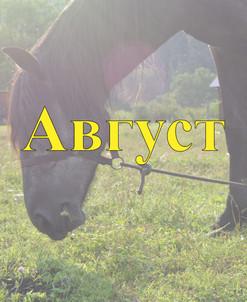 Конные туры по Алтаю Август 2021