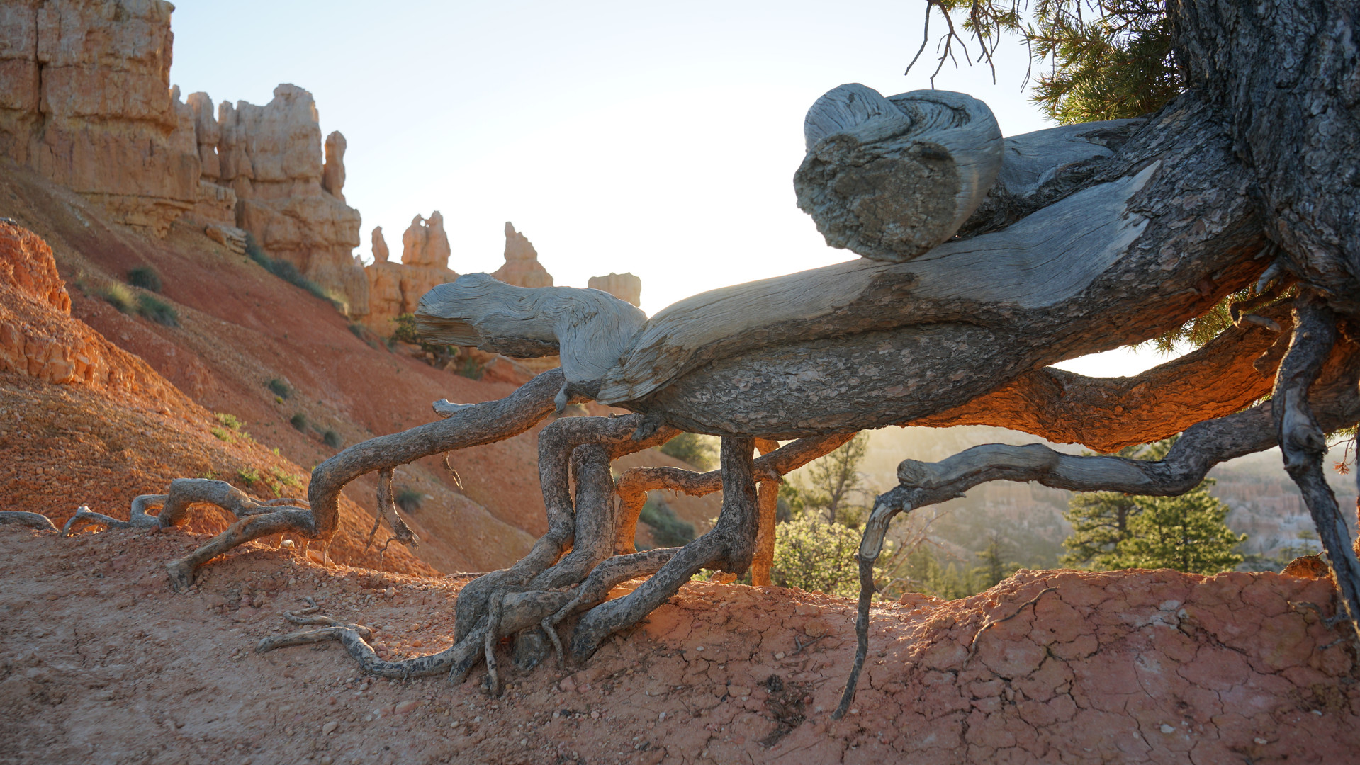 Bryce Canyon, UT 10