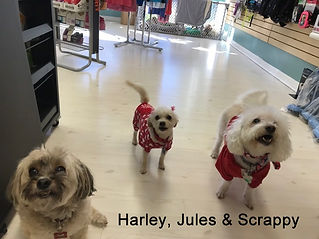 June 2019 - Harley Jules and Scrappy (00