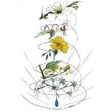 dessin-les-5-fleurs-de-la-solution-d-urg