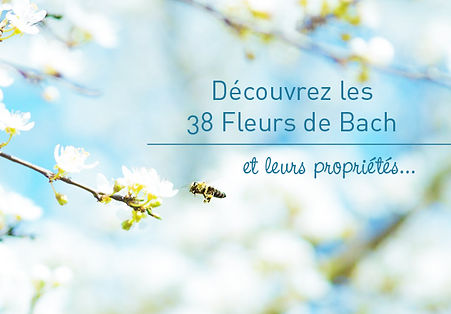 62b8bc8bf1758f6fca0426ec45d780e8cf0f1bc3_boutique-38-fleurs-de-bach_edited.jpg