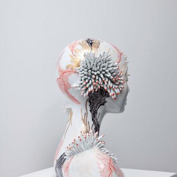 Millepora