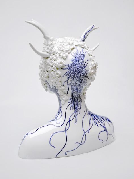 Platycerium 5 MID.jpg
