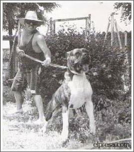 Old Presa Canario photo