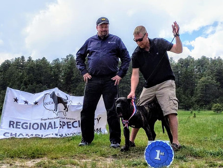 2019 PCCA Rocky Mountain Regional Specialty Results!